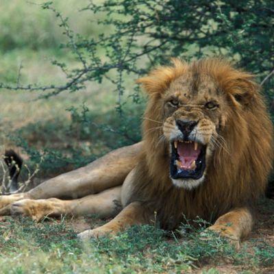 11 Days wildlife, adventure & and Gorilla trekking - Explore